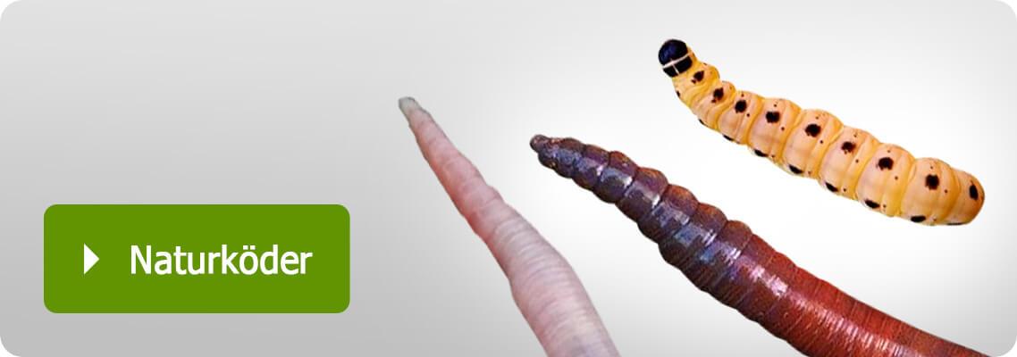 Regenwürmern, Tauwürmer, Rotwürmer und Maden zum Angeln