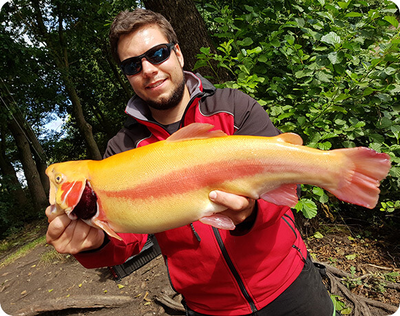 Trout Fisher Germany mit Goldforelle